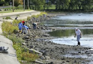 Volunteers work along the shoreline of the Rock River near Monterey Park on Sept. 7 to remove trash near Monterey Park in Janesville. (Anthony Wahl/The Janesville Gazette via AP)